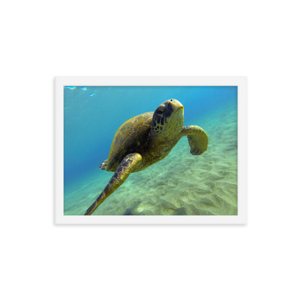 """Hello Honu"" Framed photo paper poster"