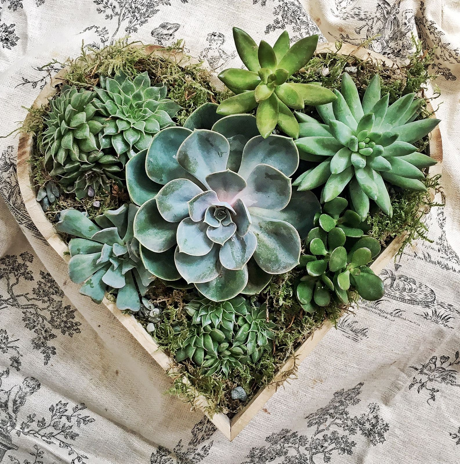 Arrangement / Sweetheart
