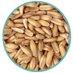 Rice Bran Extract Protectant