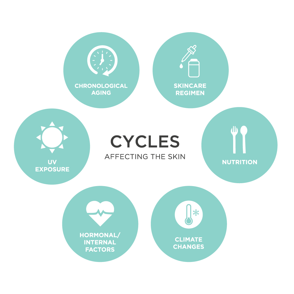 The Skin Cycles