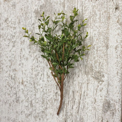 Floral - Boxwood Stem