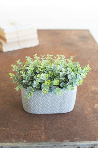 Plant - Sage in Patterned Pot