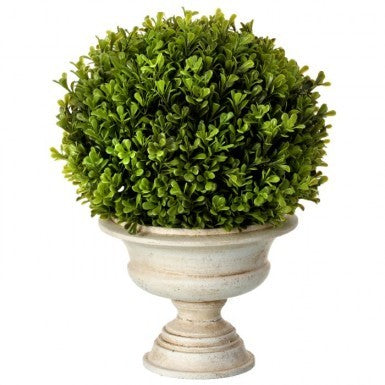 Plant - Boxwood Ball in Urn 16 inch