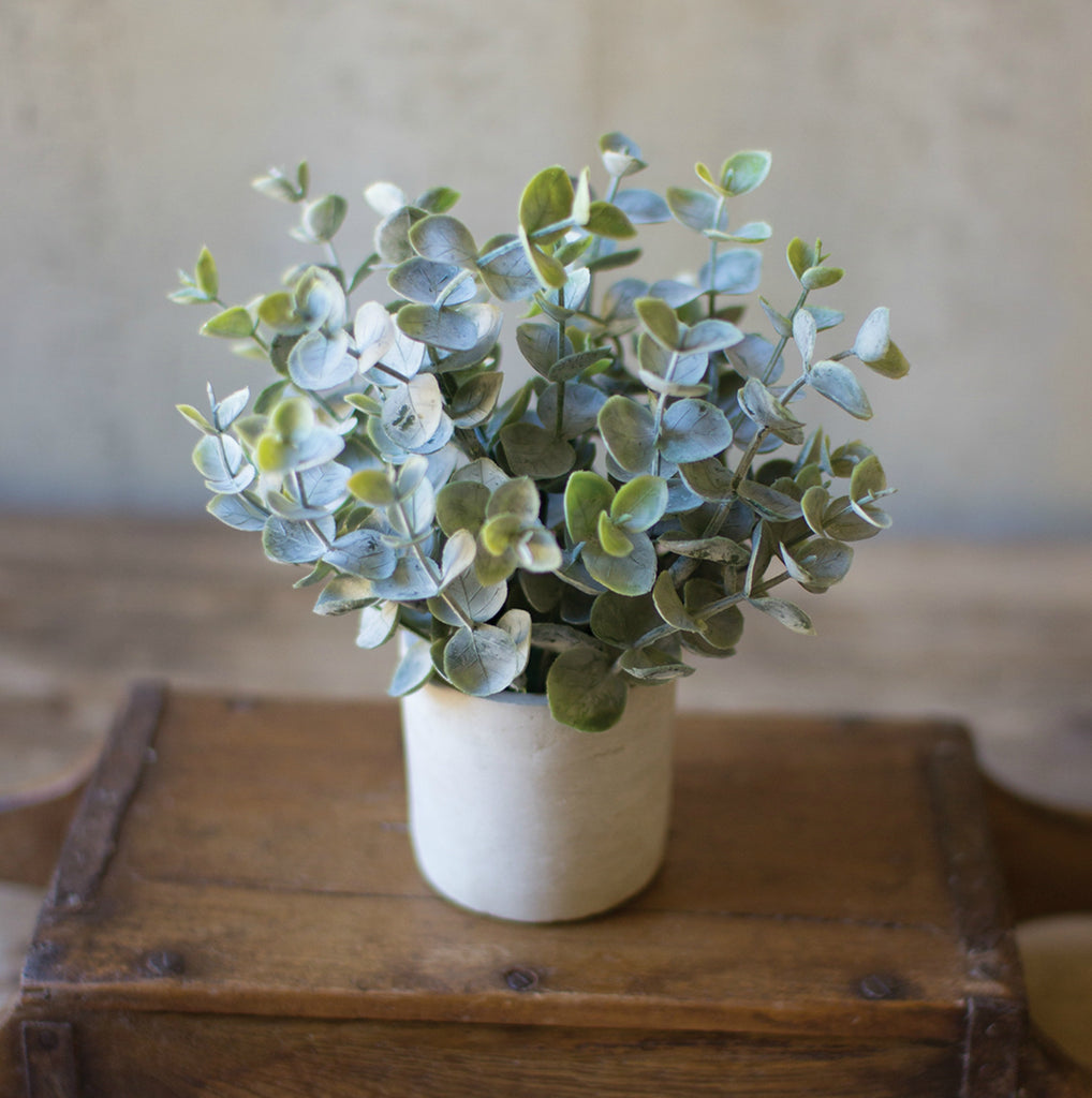 Adorable Mini Sage - Plant, Wreath & Floral Decor