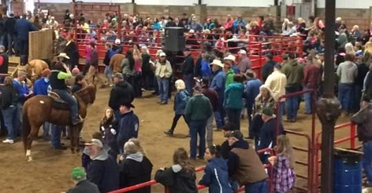 Southern Ohio Horse Sale