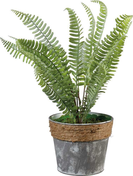 Floral - Fern In Pot | PREORDER