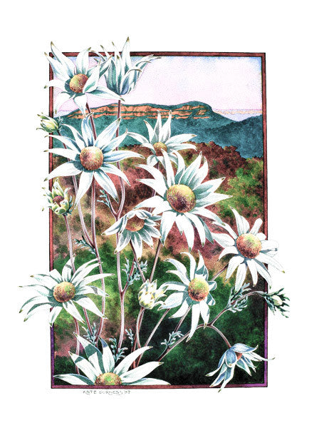 Flannel Flowers