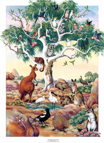 Australian Tree of Life, Special Offer