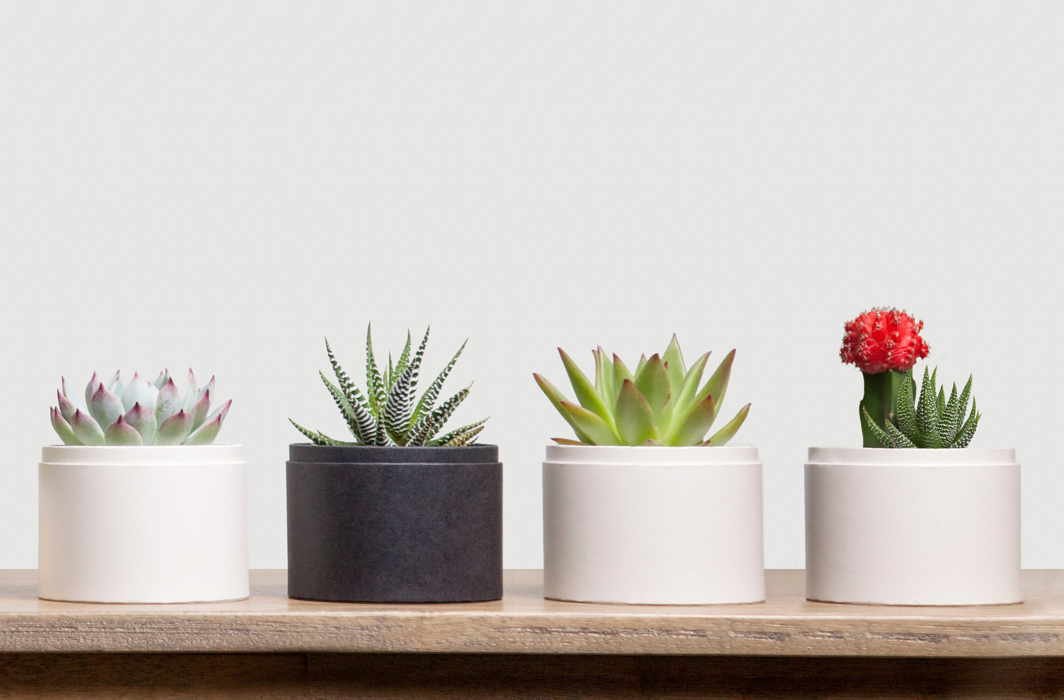 Everyday Succulent Gifting Corporate Gifts Lula S Garden