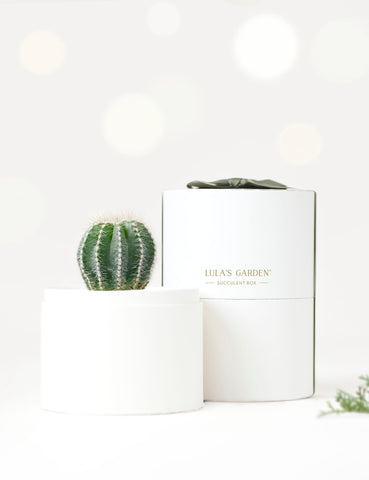 Holiday Cacti Garden