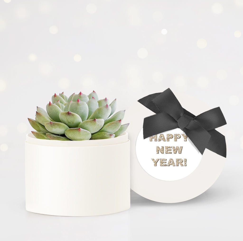 New Year Client Gifts Succulent Garden - Bliss Garden