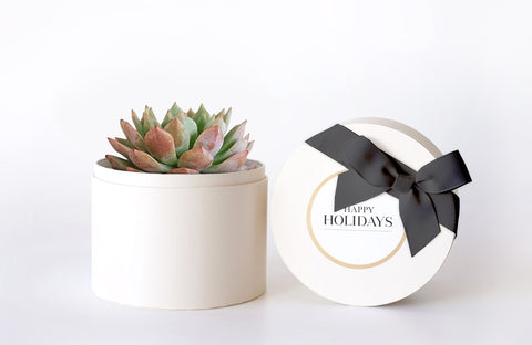 Bliss Garden - Holiday Gift