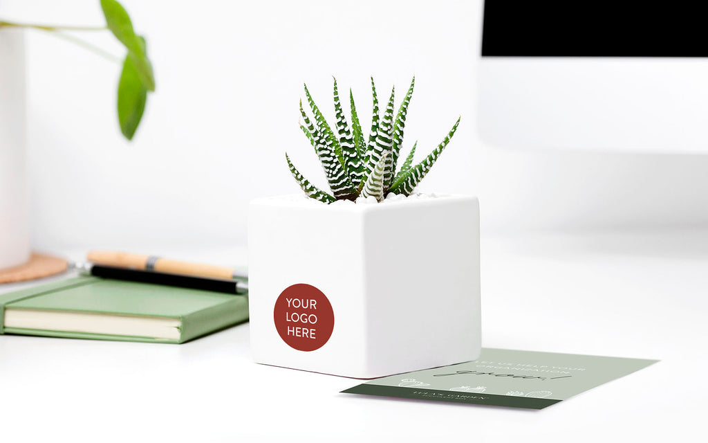 SNDS // Branded Ceramic Desk Succulent