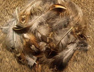 Ruffed Grouse Feathers