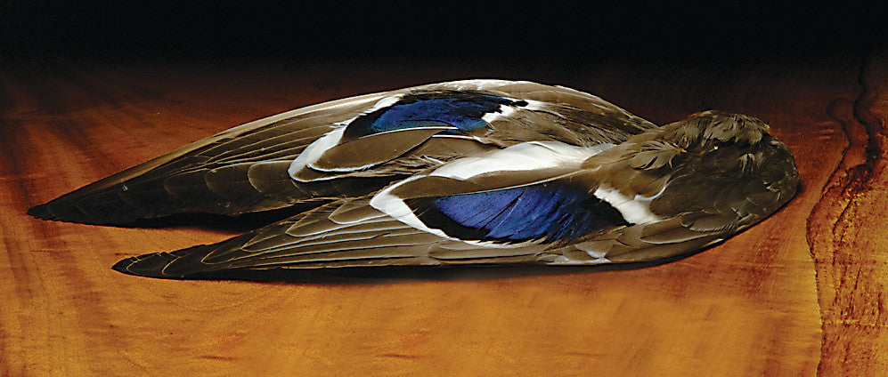 Mallard Whole Wings - The TroutFitter Fly Shop