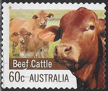 Australia 3720 Used - Farm Products - Beef Cattle