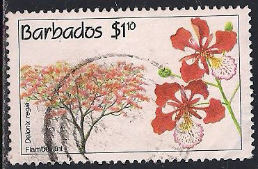 Barbados 825 Used - Flowering Tree - Flamboyant - Thin