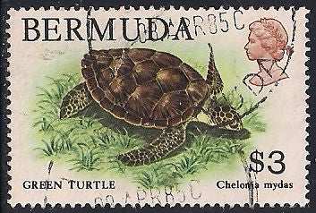 Bermuda 378 Used - Green Turtle