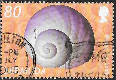 Bermuda 847 Used - Shells - ‭Purple Sea Snail