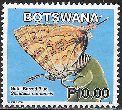 Botswana 855 Used - Butterflies - ‭Natal Barred Blue