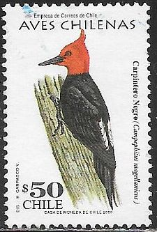 Chile 1313 Used - Bird - Woodpecker