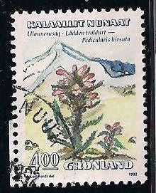 Greenland 190 Used - Flower