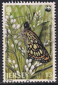 Jersey 507 Used - Butterfly - Large Chequered Skipper