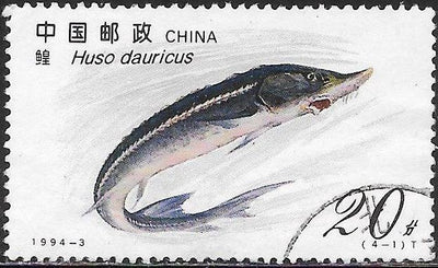 People's Republic of China 2487 Used - Sturgeon - Kaluga (Huso dauricus)