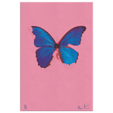 Butterfly by Damien Hirst