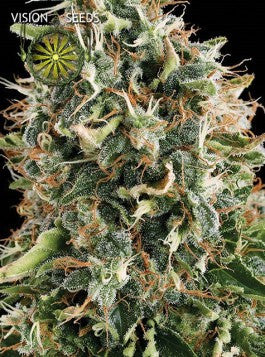 White Widow - Feminised, Vision Seeds, Cannabis Seeds, Marijuana Seeds, Weed Seeds