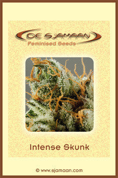 Intense Skunk - Feminised, De Sjamaan Seeds, Cannabis Seeds, Marijuana Seeds, Weed Seeds