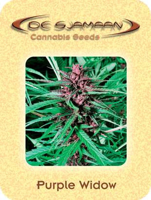 Purple Widow - Regular, De Sjamaan Seeds, Cannabis Seeds, Marijuana Seeds, Weed Seeds
