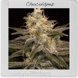 Chocolopez - Feminised, Blim Burn, Cannabis Seeds, Marijuana Seeds, Weed Seeds