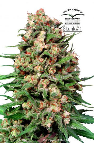Skunk #1 - Regular, Dutch Passion, Cannabis Seeds, Marijuana Seeds, Weed Seeds