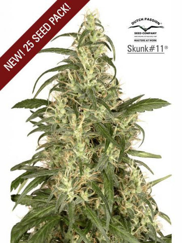 Skunk #11 - Feminised, Dutch Passion, Cannabis Seeds, Marijuana Seeds, Weed Seeds