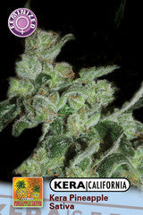 Pineapple Sativa - Feminised, Kera Seeds, Cannabis Seeds, Marijuana Seeds, Weed Seeds