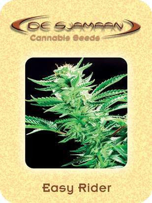 Easy Rider - Regular, De Sjamaan Seeds, Cannabis Seeds, Marijuana Seeds, Weed Seeds