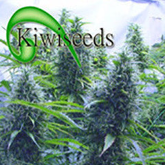 Cannabis Seeds
