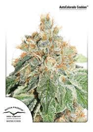 AutoColorado Cookies - Autoflowering/Feminised, Dutch Passion, Cannabis Seeds, Marijuana Seeds, Weed Seeds