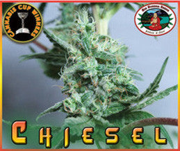 Chiesel - Feminised, Big Buddha Seeds, Cannabis Seeds, Marijuana Seeds, Weed Seeds