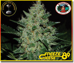 Freeze Cheese '89 - Feminised, Big Buddha Seeds, Cannabis Seeds, Marijuana Seeds, Weed Seeds