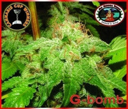 G-Bomb - Feminised, Big Buddha Seeds, Cannabis Seeds, Marijuana Seeds, Weed Seeds