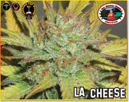 LA Cheese - Feminised, Big Buddha Seeds, Cannabis Seeds, Marijuana Seeds, Weed Seeds