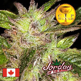 God Bud - Regular, Jordan Of The Islands, Cannabis Seeds, Marijuana Seeds, Weed Seeds
