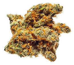 Bay 11 - Regular, Grand Daddy Purp, Cannabis Seeds, Marijuana Seeds, Weed Seeds