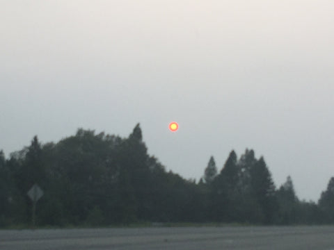 the sun at 4pm without a filter because of the crazy wildfires