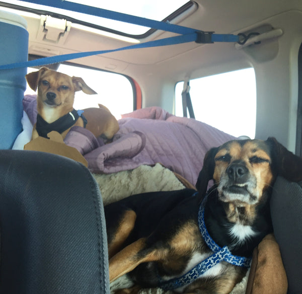 Road trip with the dogs