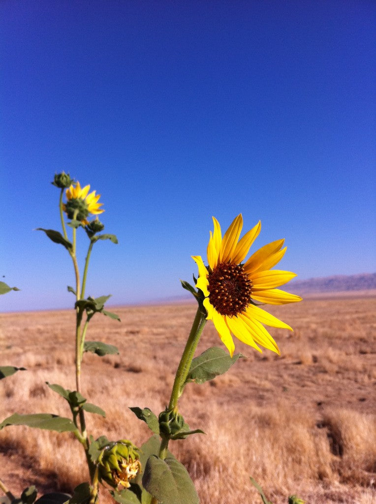 This was taken at Carrizo Plain a couple summers ago. You can find more info about Carrizo Plain here.
