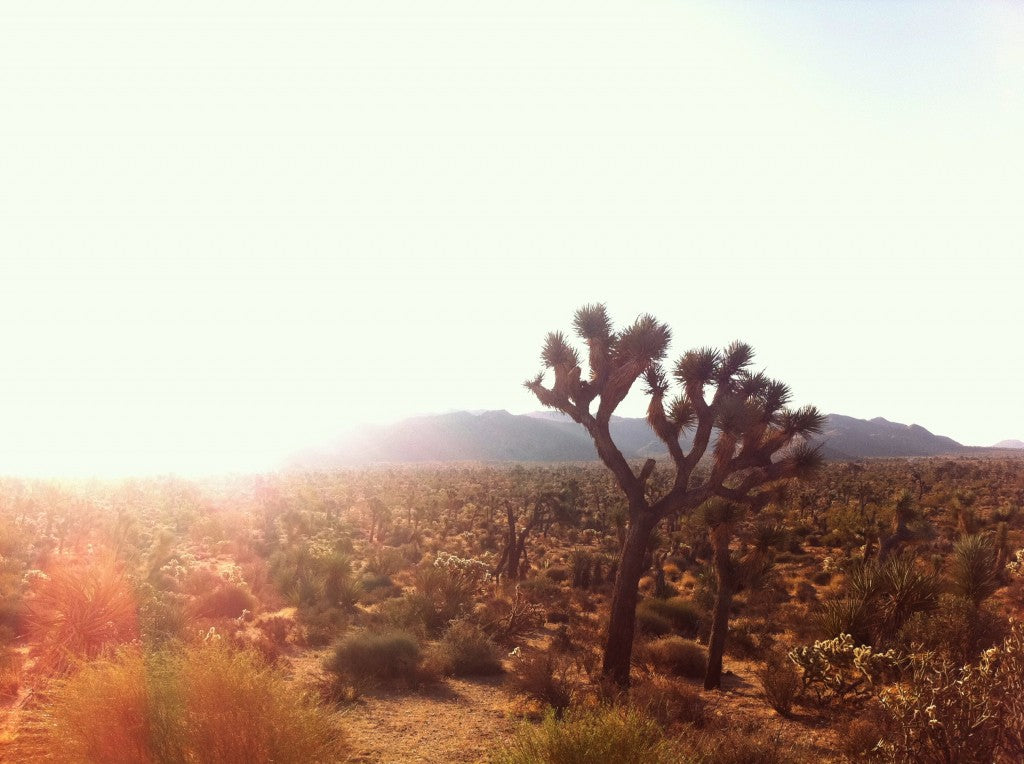 This is Joshua Tree on BLM land. It's where I buried my dog, Diva, and it has profound personal significance to me. Diva is the dog in the logo and in my tattoo. You can read more about Joshua Tree here.