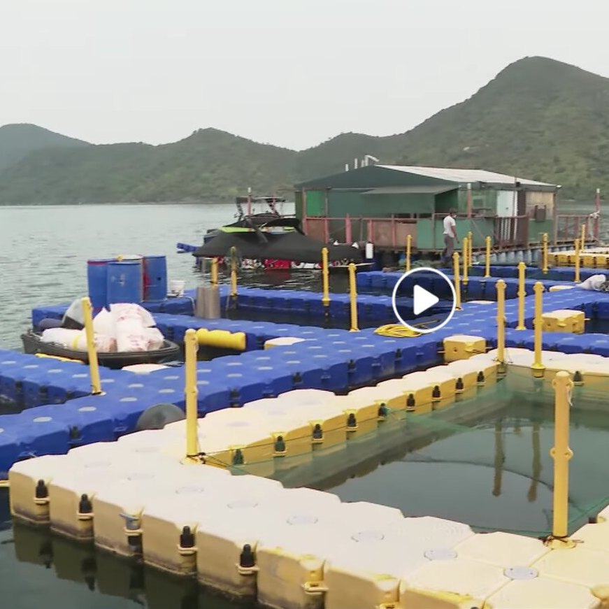 Mini-expedition: sustainable marine fish farm in Sai Kung, Hong Kong